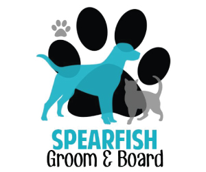 Spearfish Groom & Board