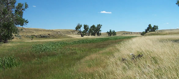 Thunder Basin National Grassland